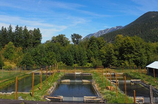 Sustainable Rainbow Trout Hatchery